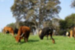 Long Dream Farm