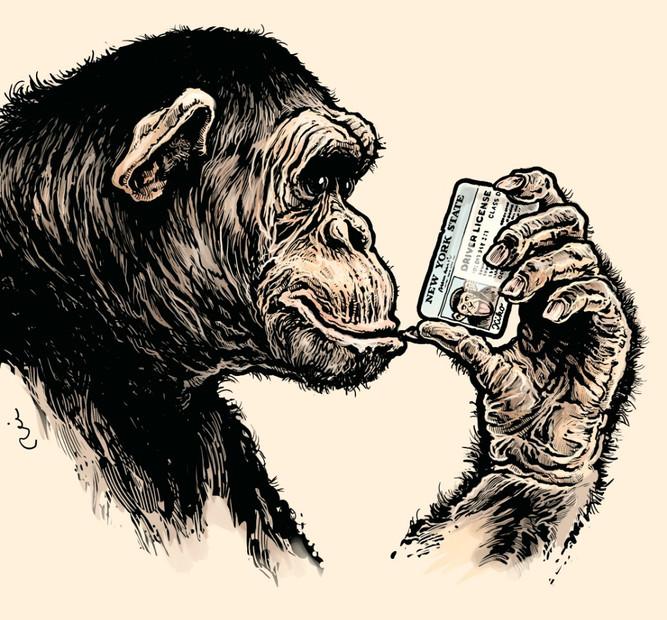 Šikovná opice