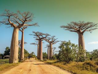 Madagascar, un viaggio alla scoperta della natura più vera