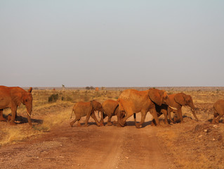Kenya, un safari in mezzo alla natura incontaminata