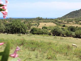 Sardegna, sei più bella dal vivo che in foto!