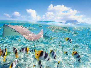 Le meraviglie subacquee di Thailandia e Mauritius