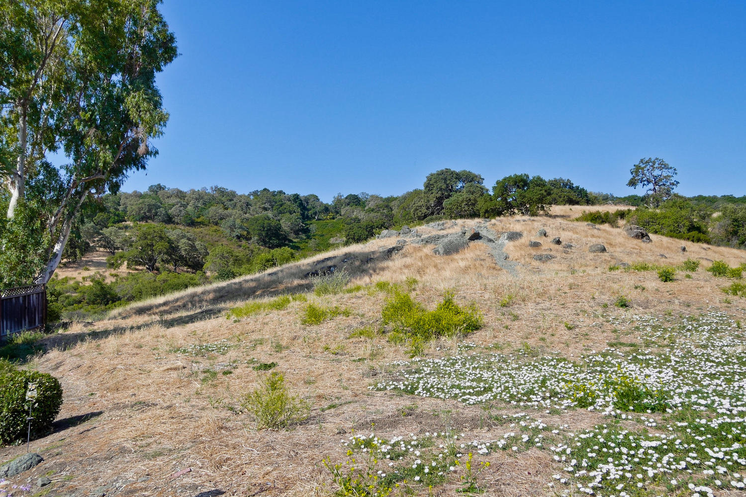 820 Colleen Dr San Jose CA-large-010-11-Foothills in Your Front Yard-1500x1000-72dpi