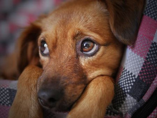 Easy Things You Can Do to Help a New Pet Feel at Home While Also Starting a New Business