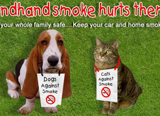 Smoking: The Effects on Your Family Pet