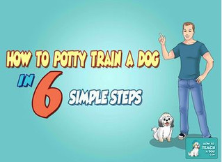How to Potty Train a Dog in 6 Simple Steps