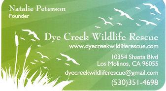 Dye creek card bird rescue.jpg