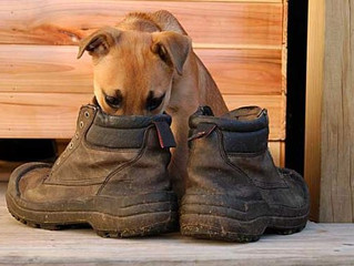 WHEN THE ONE YOU LOVE SMELLS LIKE AN OLD SHOE
