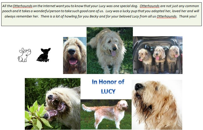 In memory of Lucy
