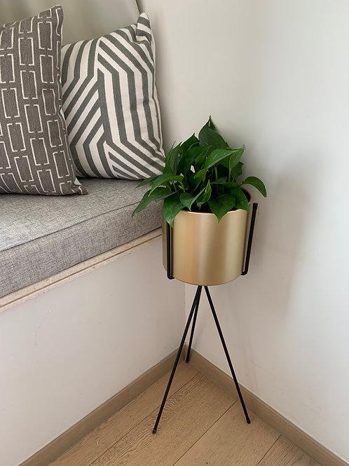 Gold Flower Pot Stand
