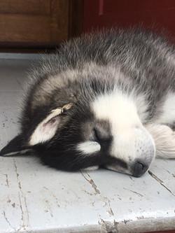 Tarn, Janine's new pup