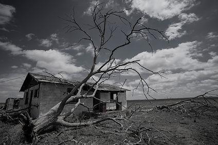 last tree in tx.jpg