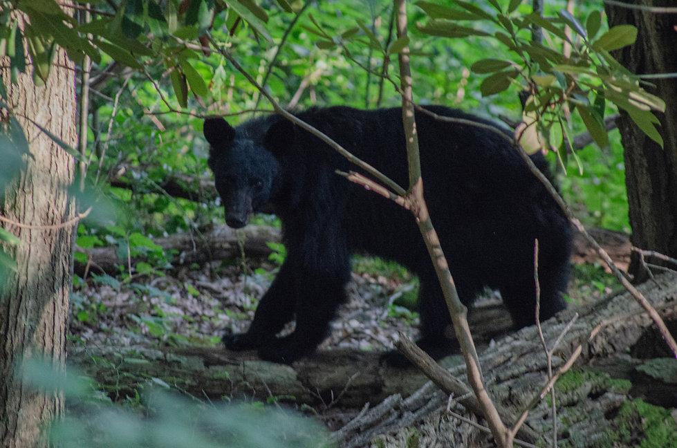 6.1 mama bear.jpg
