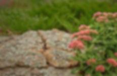 House_1_CU_Flowers_Pink_1.jpg
