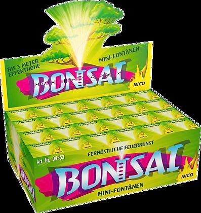 Bonsai, 24er Display
