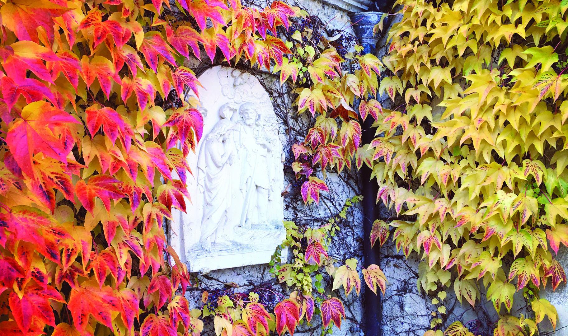 Feuilles de vigne en automne