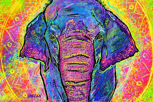 Juno the Elephant