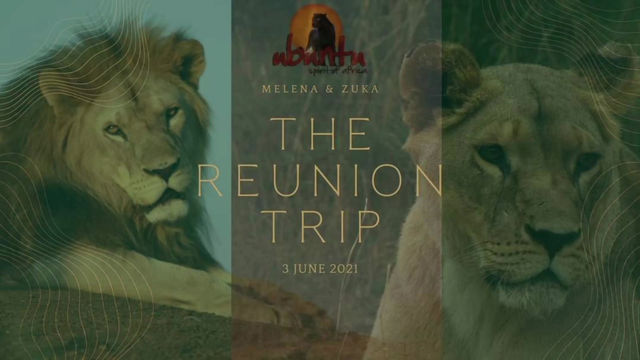 The Reunion Trip - Melena & Zuka's Homecoming