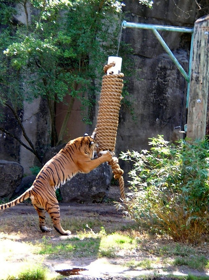 Animal Enrichment