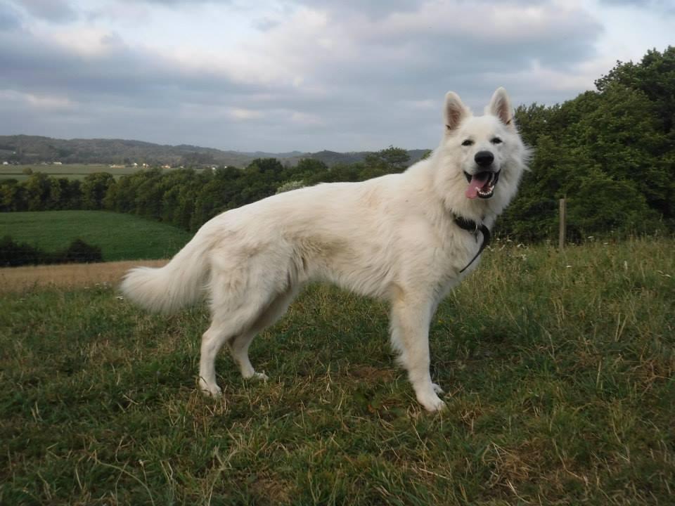gardiennage chien