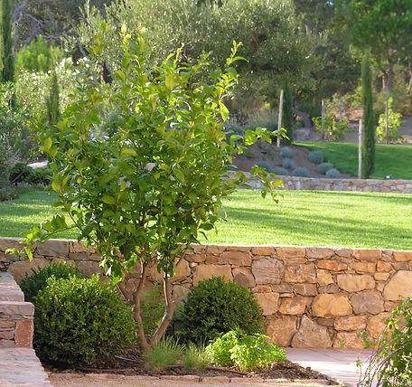 Vertigo Paysage - Paysagiste conseil Golfe de Saint-Tropez