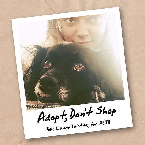 Tove-Lo-Adopt-Dont-Shop-Social-Post_300-scaled.jpg