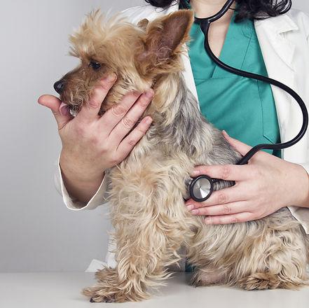 Clínicas Veterinarias
