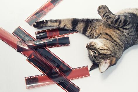 Fotografía Foto Estudio Madrid Swing Pin-Up PinUp Retro Canina Felina perros gatos animales mascotas