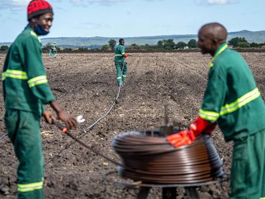 An Ethanol Plant In Zimbabwe Is Expanding Despite Critics