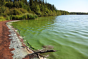 Lake with Algae in the water making it t