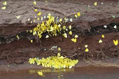 Mariposas en la desembocadura del arroyo Paraíso