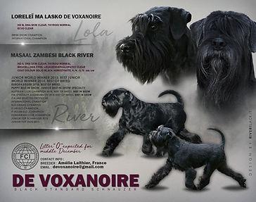 ADV_voxanoire-litter-O.jpg