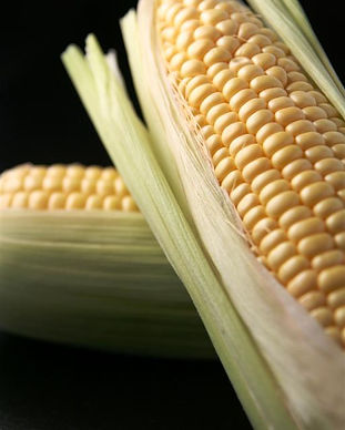 Corn Black Background