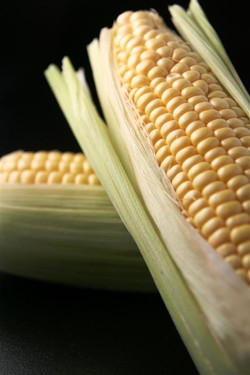 Corn Black Background