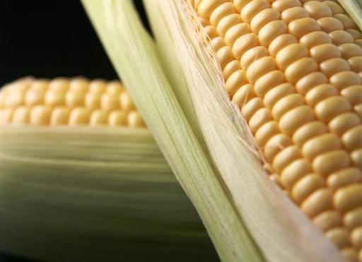 Maçaroca de milho . 1 unid