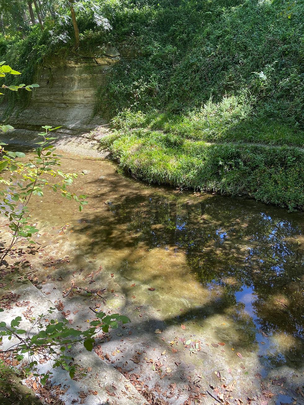 Turtle Creek.jpg