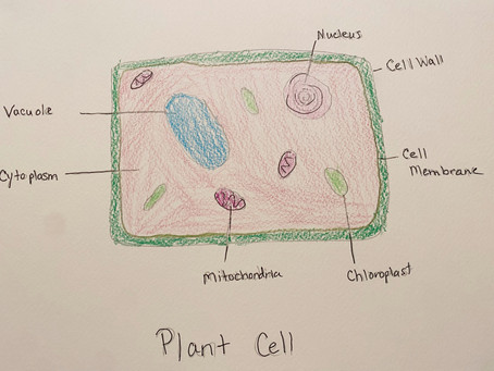 From Seeds to Cells