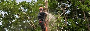 ektionsfällning; Fälla träd i sektioner i sandviken, gävle, söderhamn, hudiksvall