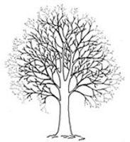 Reducera krona på träd i Gävle, nordanstig, hudiksvall, söderhamn, sandviken