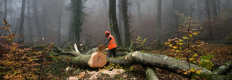 Arborist - Trädbeskärning, fälla och beskära träd i Gävleborgs län
