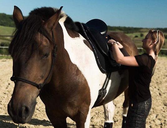pszichológus buda lovasterápia, horse therapy buda