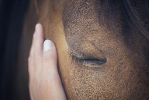 A female hand stroking a brown horse hea