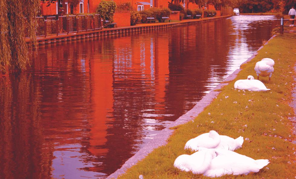 Aries Photo 2 Geese.jpg