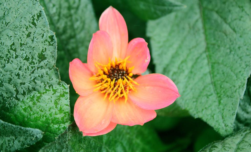 Aries photo 1 flower.jpg