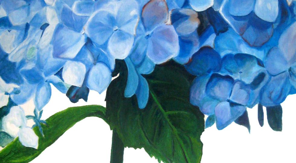 hydrangea-flower-photo-realistic-paintin