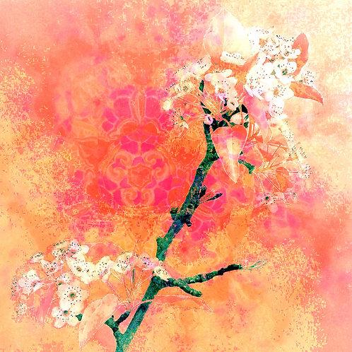 Bradford Pear Blossom Pink/Orange