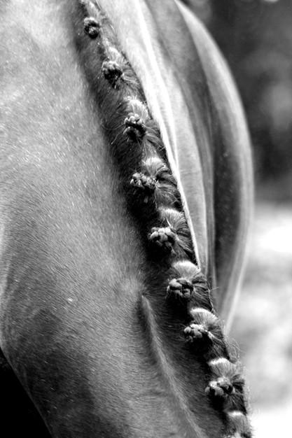 equine-candid-portrait-photography