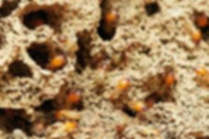 termites-3367350_1920.jpg