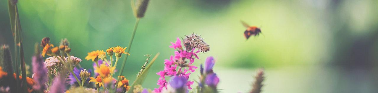 fleurs et abeille