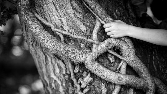 main et arbre